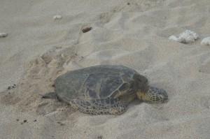 tortoise_four_seasons_0931a_optimized
